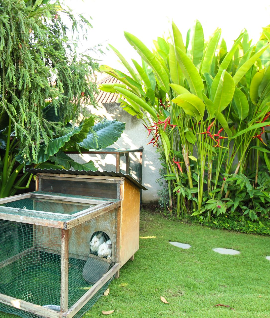 bali interiors the garden with rabbits
