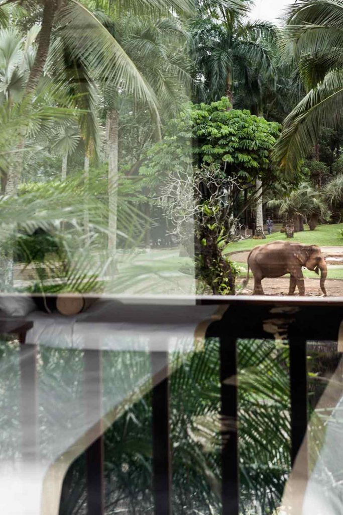 bali interiors, elephant park