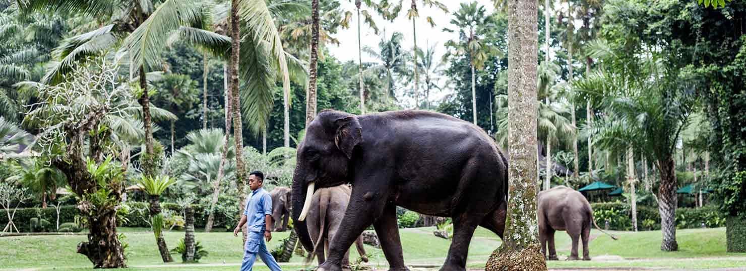 bali interiors, mason elephant park