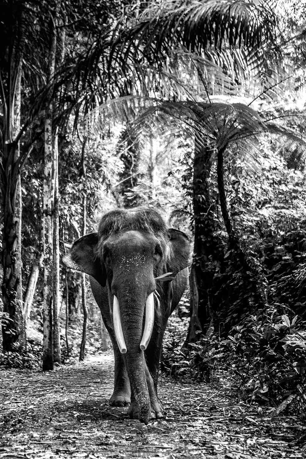 bali interiors mason elephant park