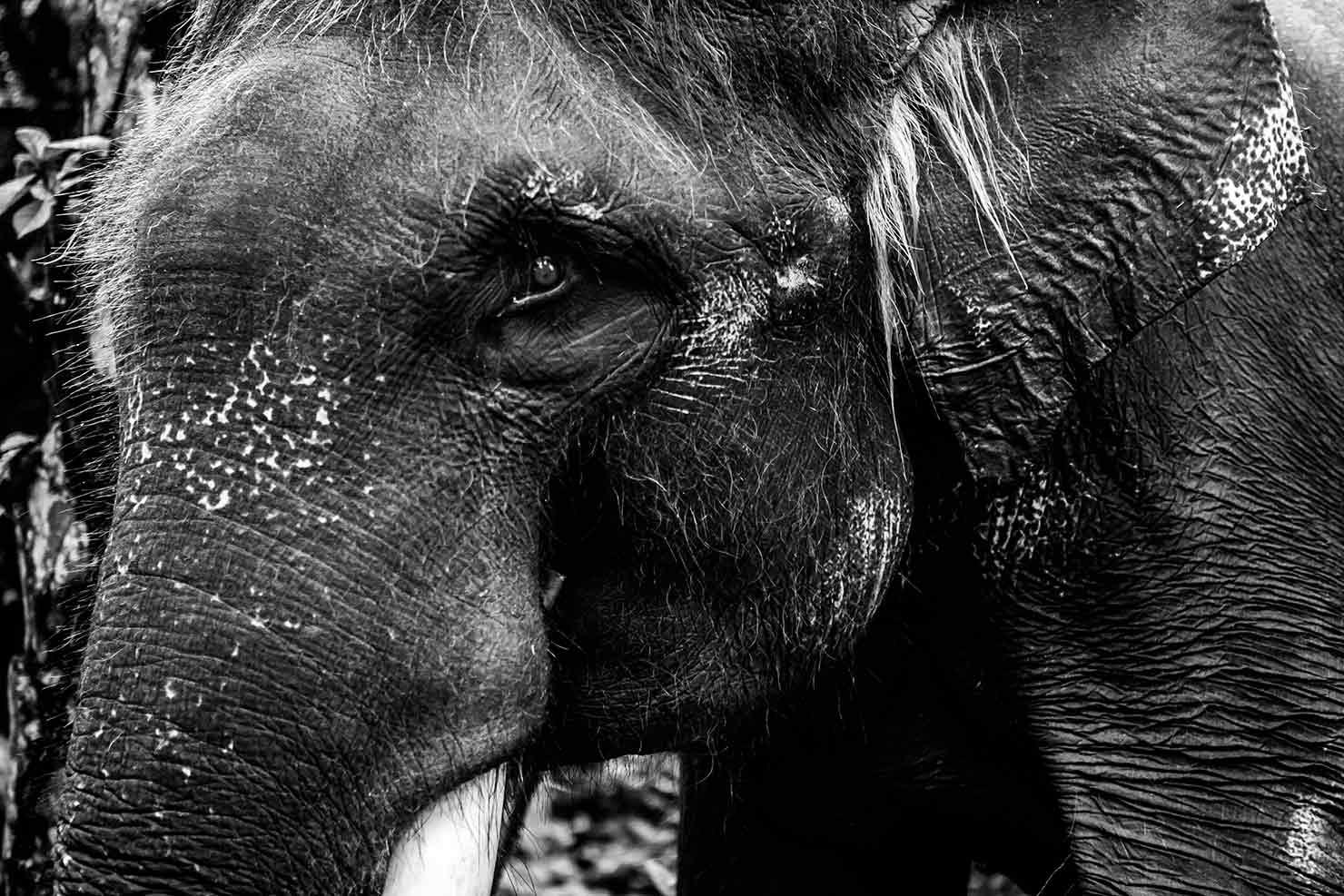 bali interiors- mason elephant park