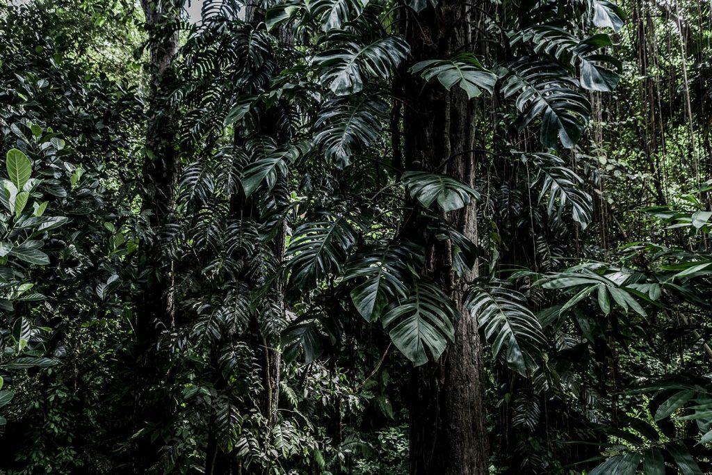 Bali Jungle by Sheila Man