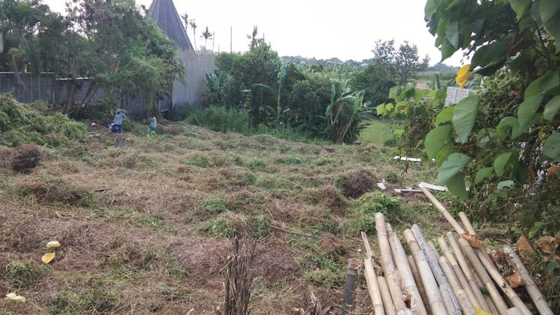 A building surprise in Bali. Our cleared land!