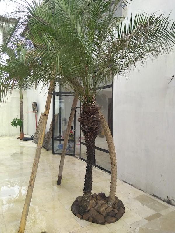 Bali Interiors Build Diary 35 Diane garden