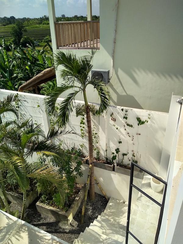 Bali Interiors Build Diary 42 new palm tree