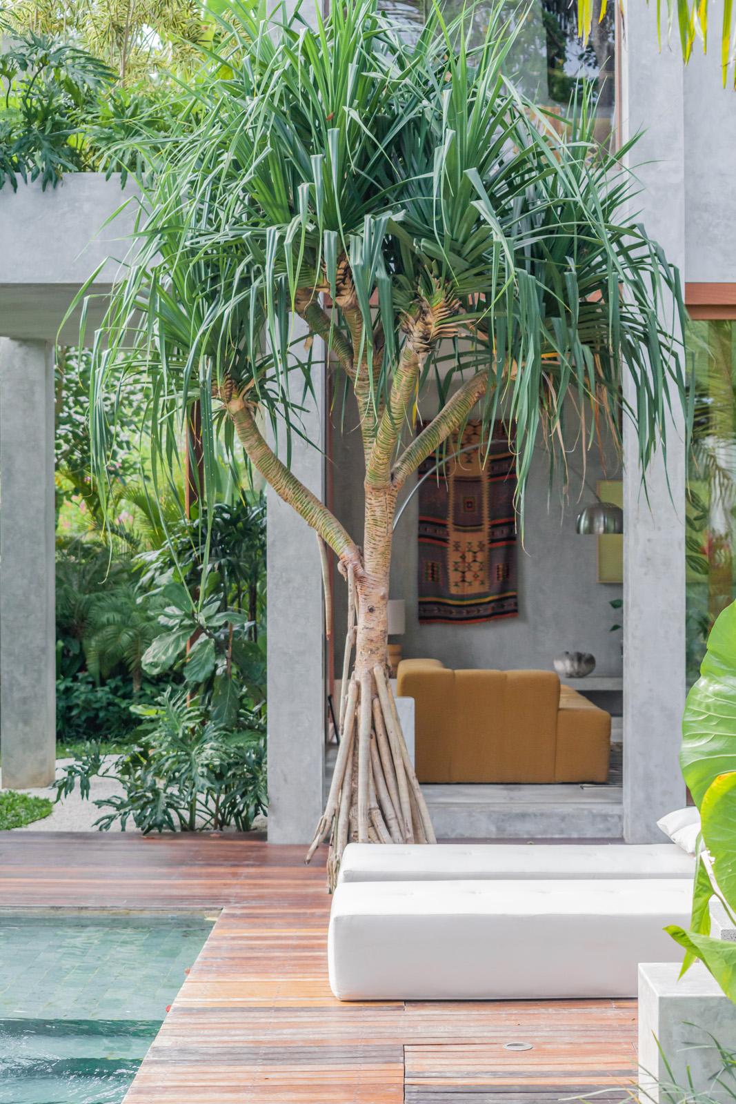 Villa Scampi, Bali Interiors, home decor, Modern architecture,